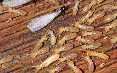 4 Common Signs of Termites