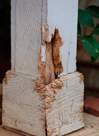 How to Remove Termites