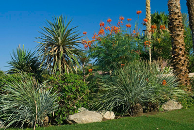Weed Control Services in Scottsdale, AZ
